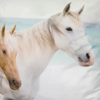 Cojines caballos 45 x 45 - 2