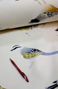 Tela cretona pájaros THEVENON 280 - 2