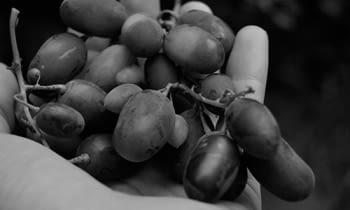 Pasión vinícola desde 1870