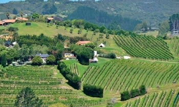 Vinos de Nueva Zelanda