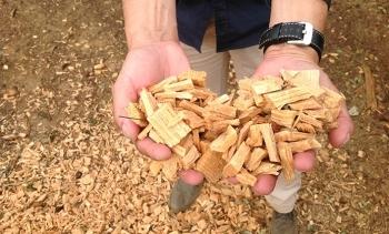 Cervisimag realiza una prueba en Collserola para la producción de biomasa