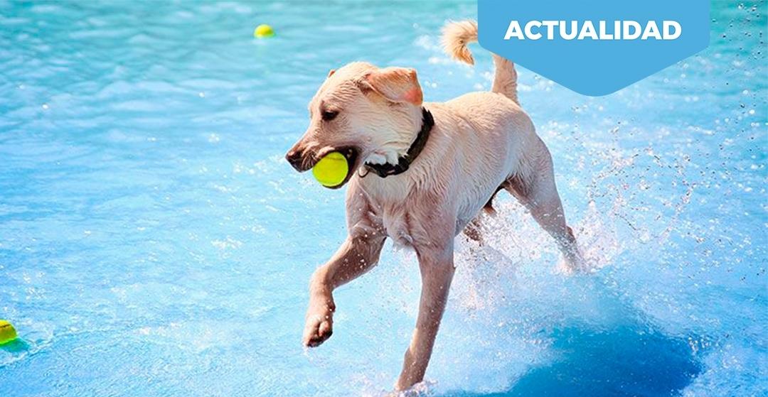 Protege a las mascotas del calor
