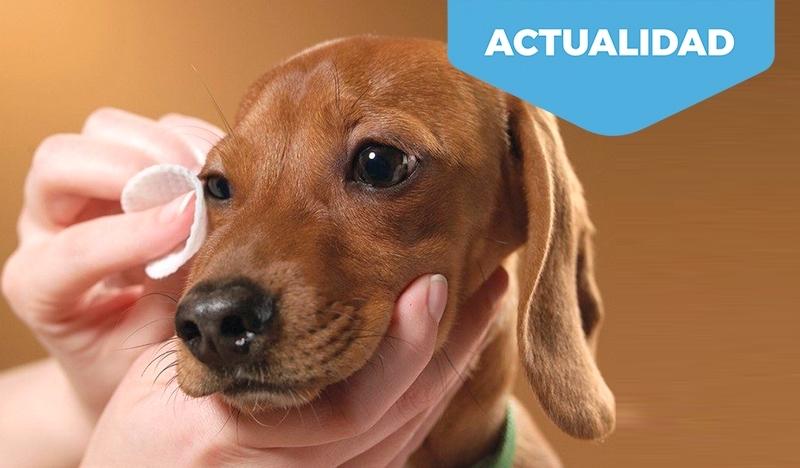 Cuidado de ojos y oídos en perros y gatos