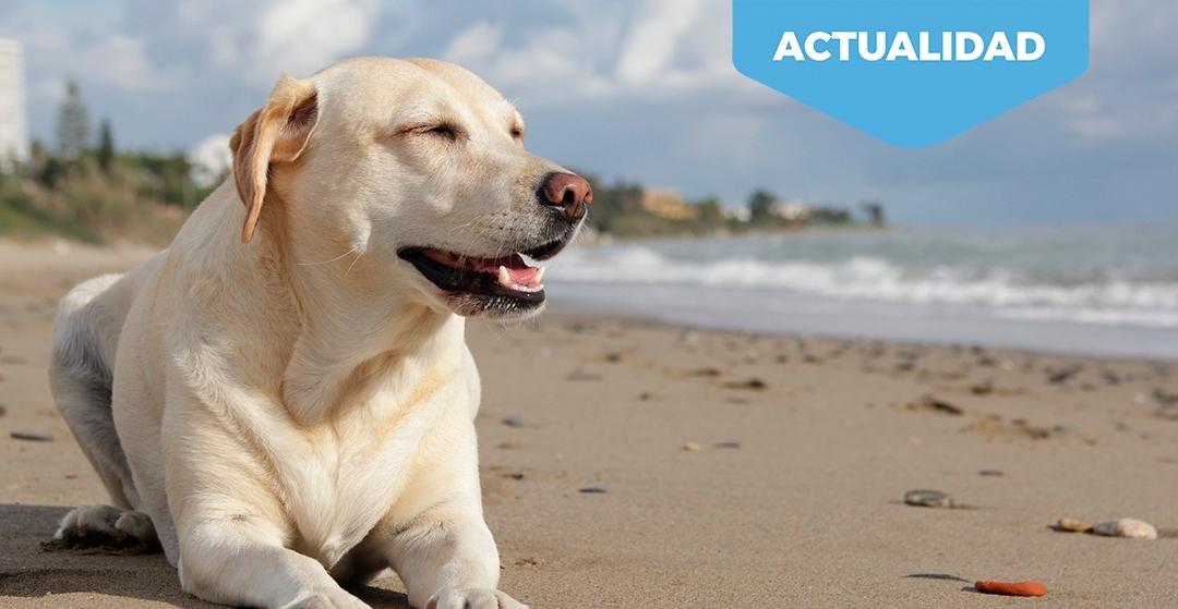 Playas para perros en España 2019