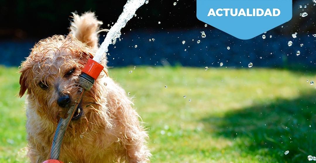 Llegan las altas temperaturas. Consejos y artículos imprescindibles para tus clientes propietarios de perros.