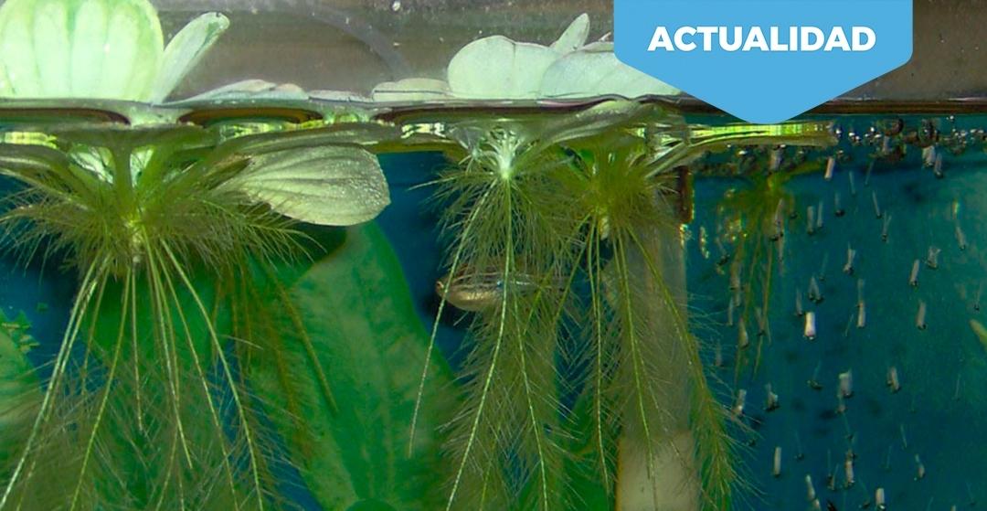 Acuariofilia. ¿Control de especies invasoras?