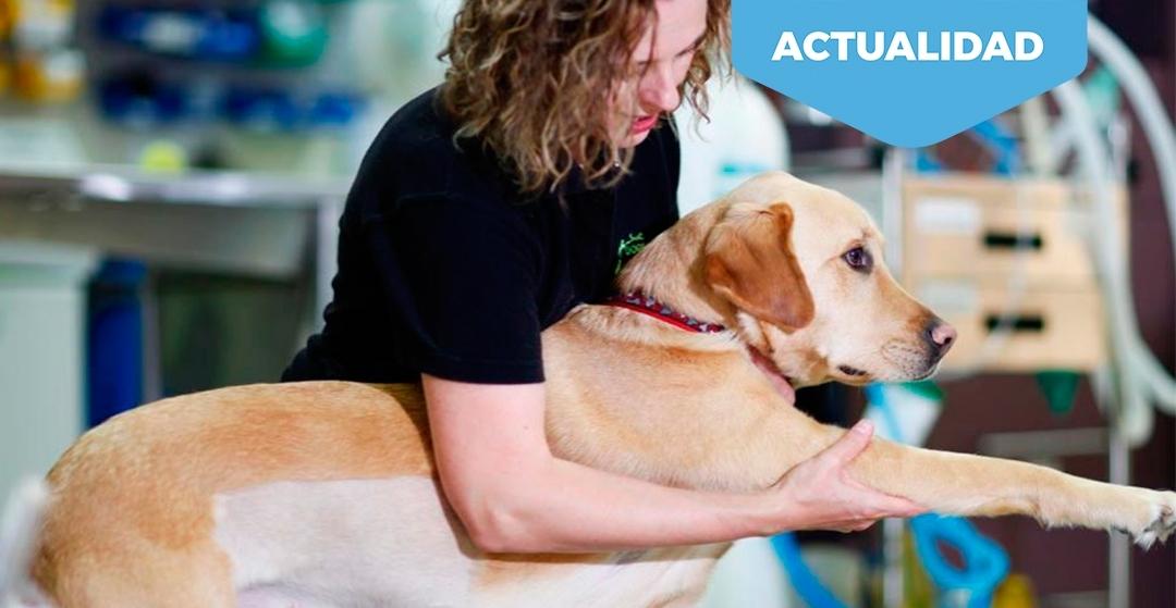 Fisioterapia para animales