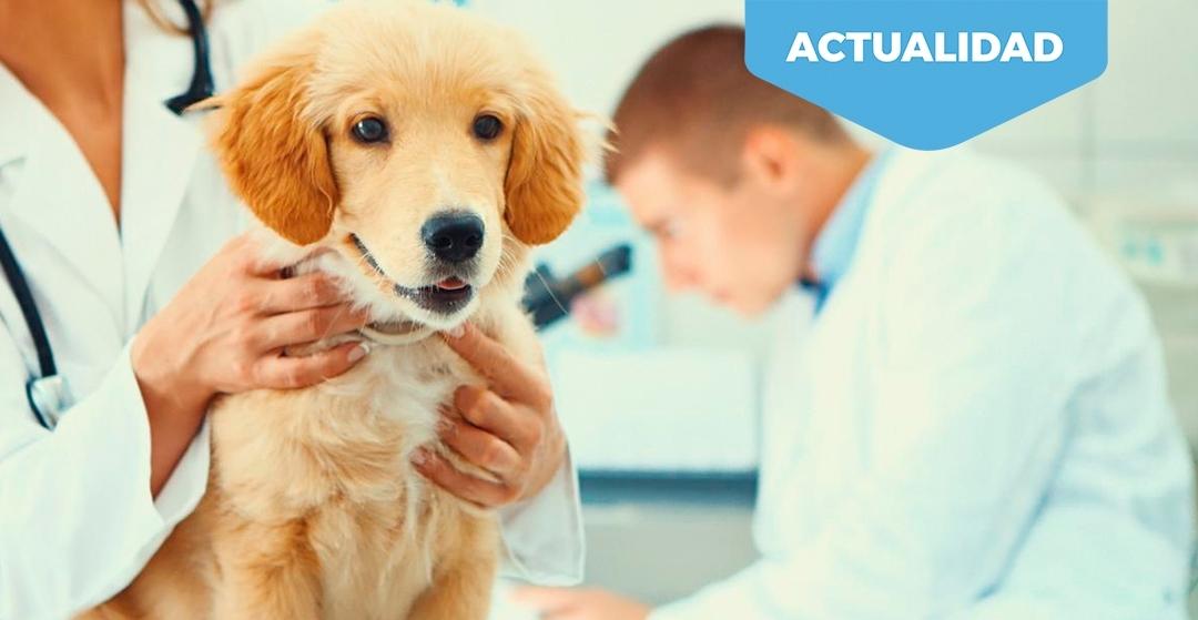 Tratamientos con CBD (Cannabidol) para mascotas