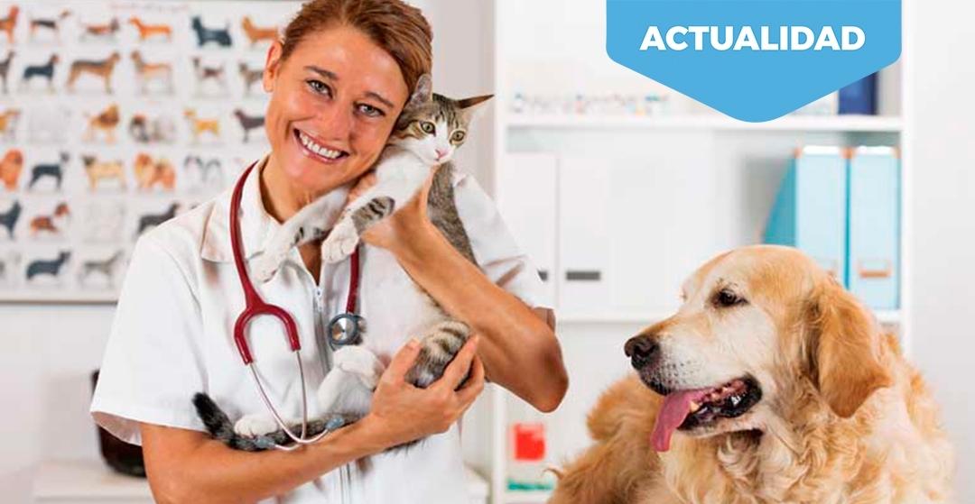 El sector veterinario pide tranquilidad a propietarios de mascotas por el coronavirus