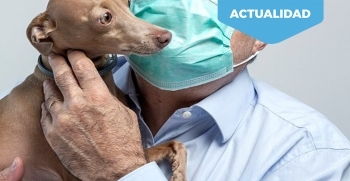 Cuidado de las mascotas durante la cuarentena del coronavirus