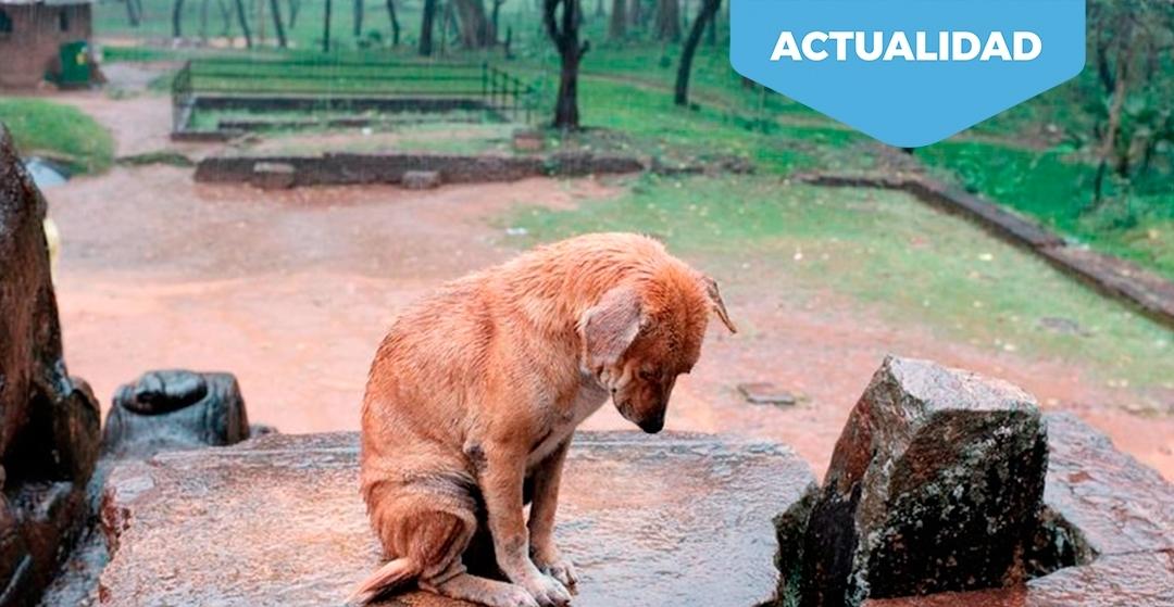 Datos desoladores. El abandono de perros se incrementa un 25% durante la desescalada.