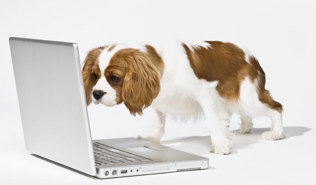 Perrito mirando ordenador
