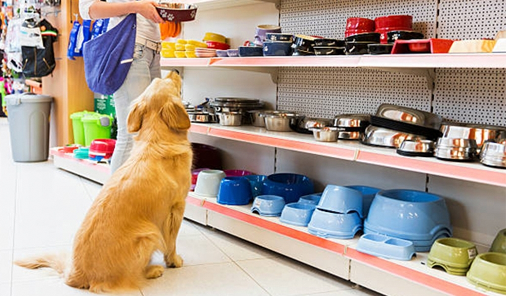 perro comederos tienda