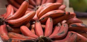El plátano Rojo con Sabor a Frambuesa, aterriza en la península