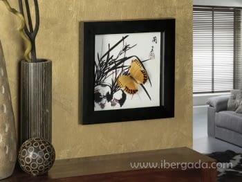 Cuadro Vitrina Butterfly I (30x30)