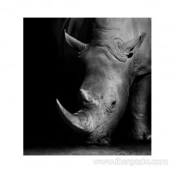 Fotografía Black Rinho (100x93) - 1