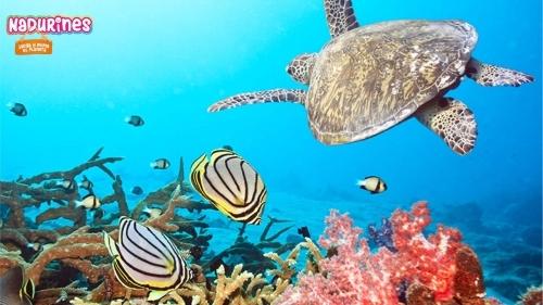 Los Nadurines se van de viaje en tortugas marinas