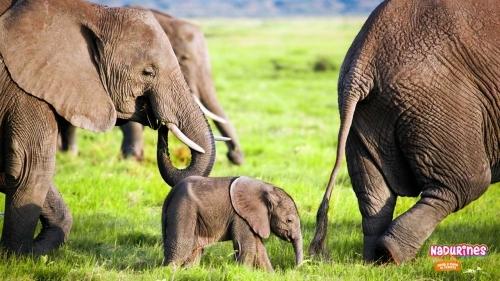 ¡Los Nadurines celebran el Día Internacional del Elefante!