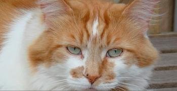 Fallece a  la edad de 31 años Rubble, el gato más viejo del mundo