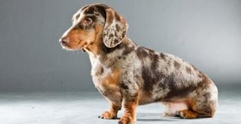 22 nuevas razas de perros que posiblemente desconoces