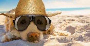 Llegan las altas temperaturas. Protege a tu mascota del calor.