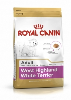 WEST HIGHLAND WHITE TERRIER 21 ADULT