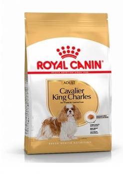 CAVALIER KING CHARLES ADULT - 1
