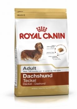 DACHSHUND 28 ADULT - 1