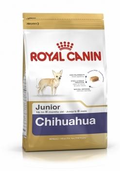 CHIHUAHUA 30 JUNIOR - 1