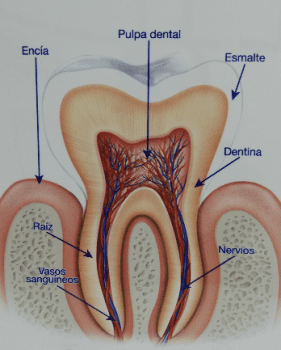 Las cinco cosas que amarillean tus dientes.