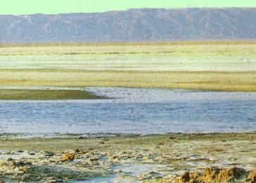 Mostra de fòssils de la Segarra