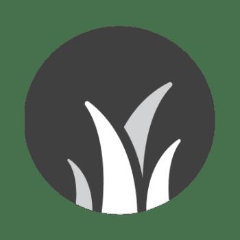 Alfalfa Roedores