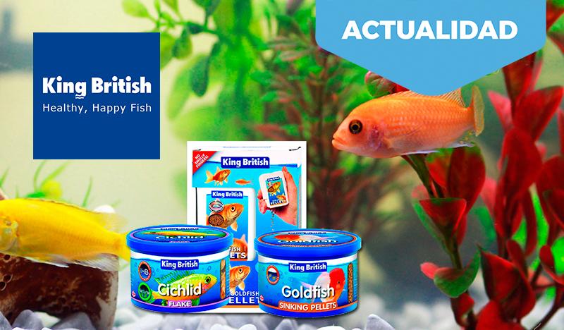 Como alimentar a peces de acuario. King British, la mejor opción y extensa gama de productos.