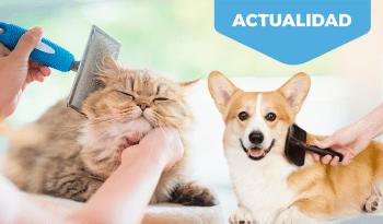 Cambio de estación, la muda en perros y gatos