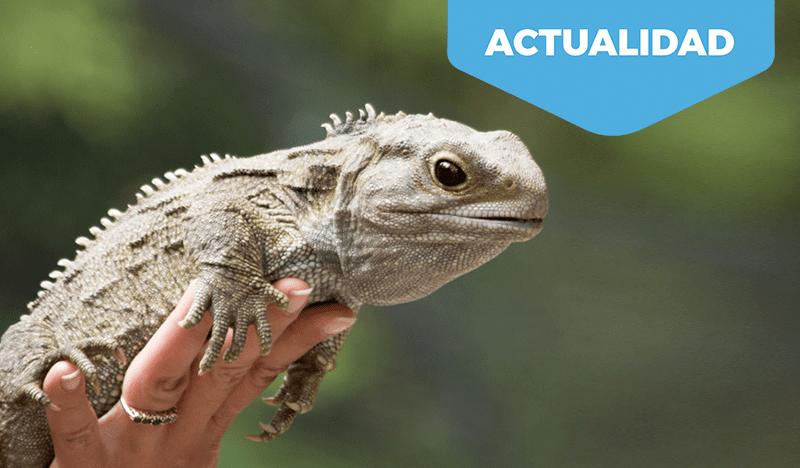 Consejos prácticos para nuevos propietarios de animales exóticos