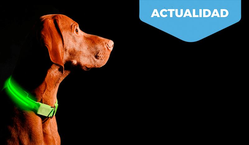 Collares reflectantes y con luz. Protegen a tu mascota y evitan accidentes.