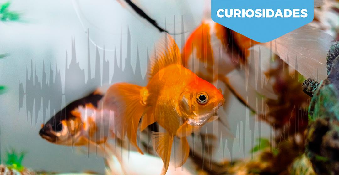 Los peces se alteran con el ruido