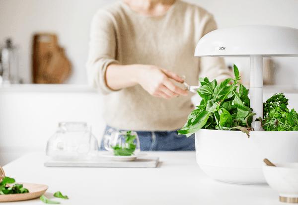 Cultiva verduras todo el año con SmartGrow
