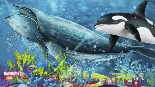 Hoy es el día de conocer a las ballenas y los delfines en el mar