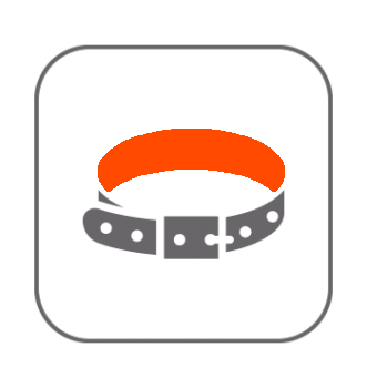 Complementos y Accesorios Erizos