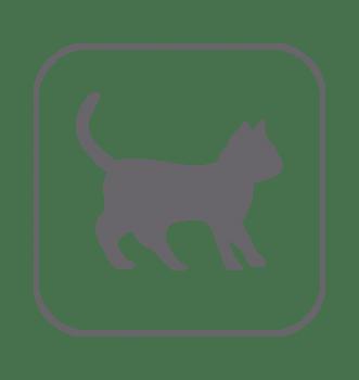 Higiene piel y pelaje gatos