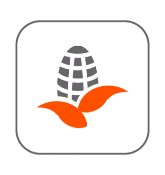 Lechos maíz aves