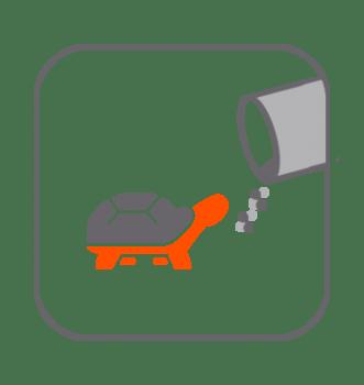 Alimentación tortugas