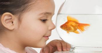 5 consejos imprescindibles si decides tener peces en casa