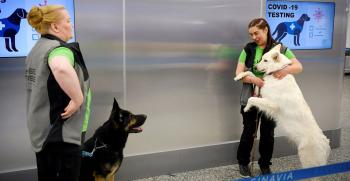 Perros que detectan el coronavirus en tan solo 10 segundos