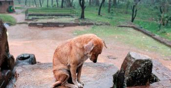 Datos terribles. El abandono de perros aumenta un 25% durante la desescalada.